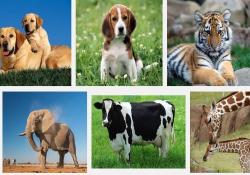 دانلود پاورپوینت زیست شناسی جانوری