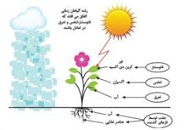 پاورپوینت عوامل محیطی موثر بر رشد و نمو گیاهان
